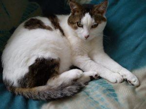 My Kizzy cat: 1995-2013